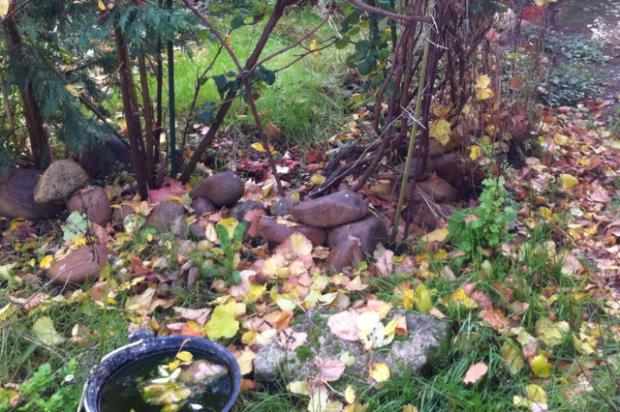 November Gardenscape